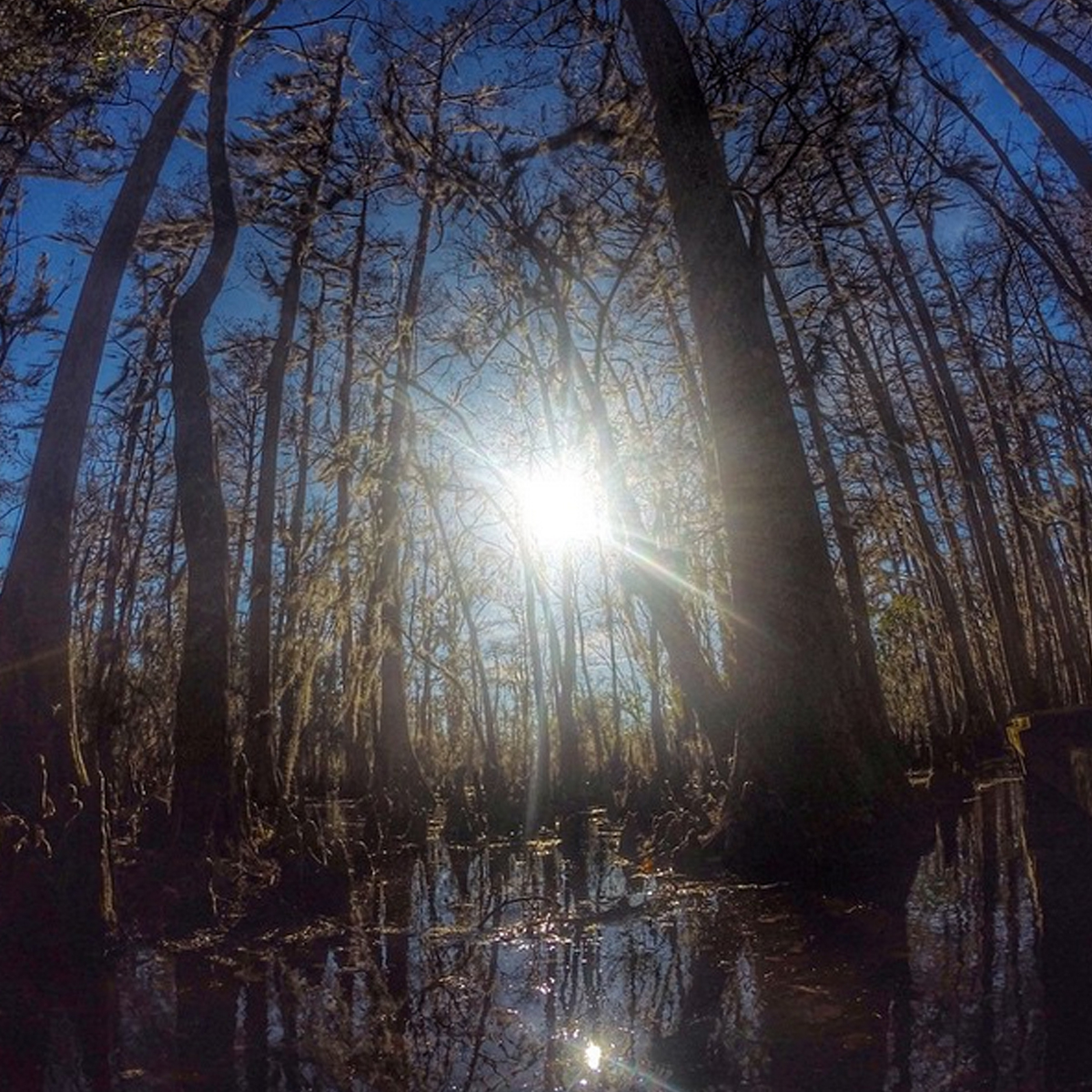 6 Hiking Trails Near New Orleans
