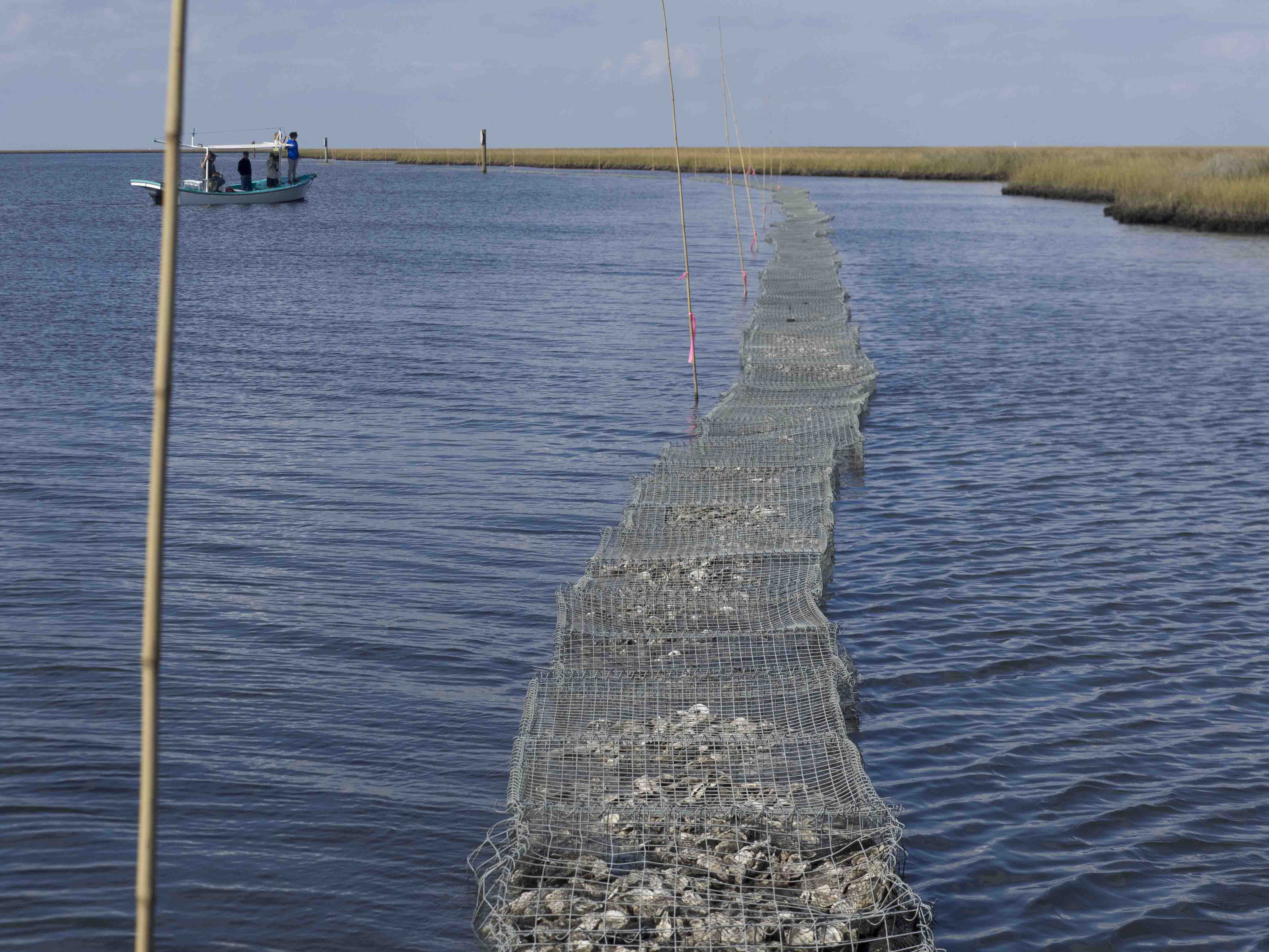 Come Shell or High Water: Oyster Shell Recycling Along Louisiana's Coastline